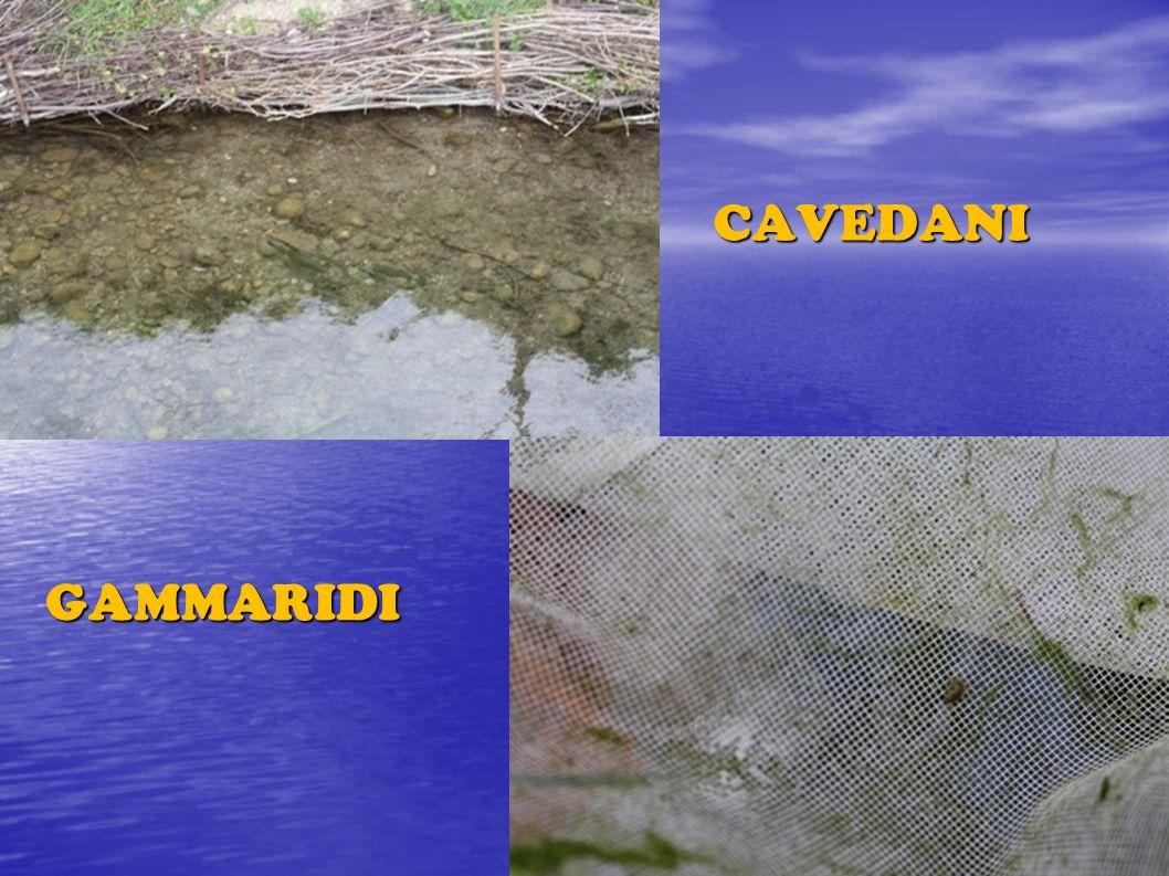 CAVEDANI GAMMARIDI Vertebrati ed invertebrati