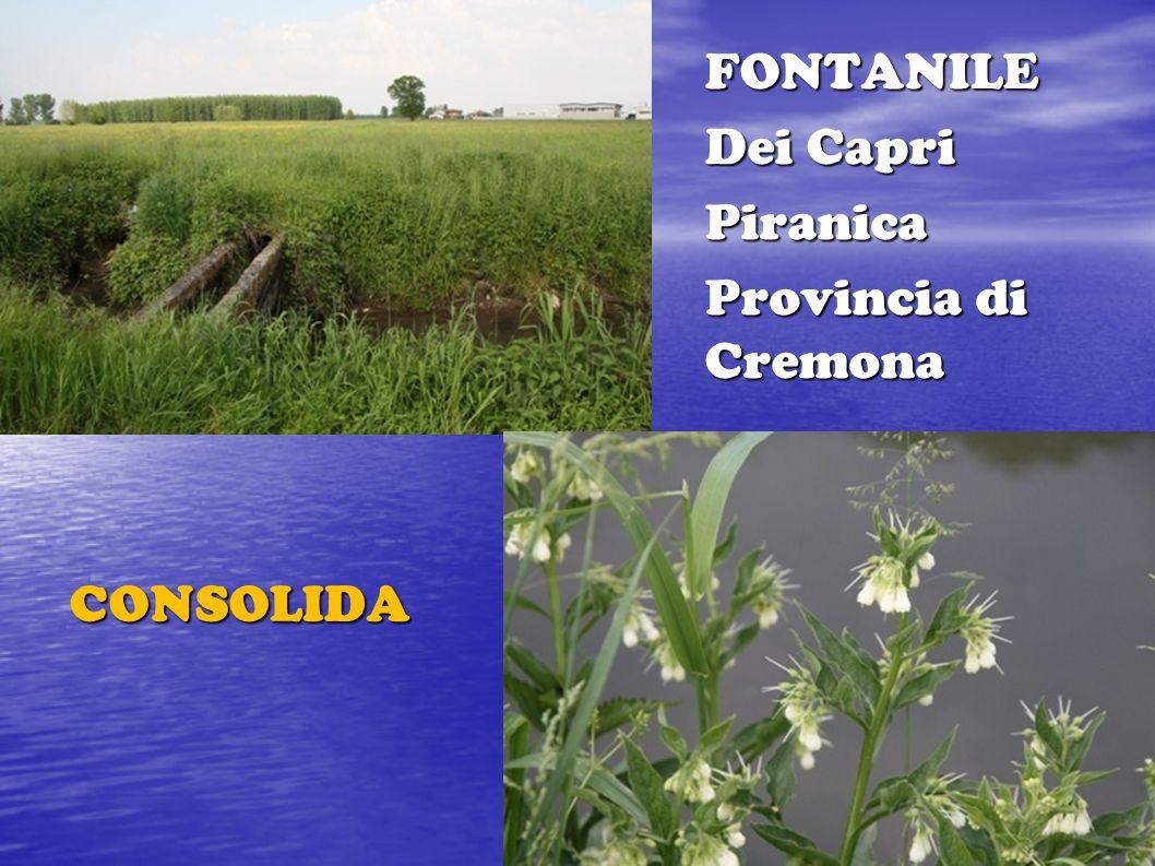 FONTANILE Dei Capri Piranica Provincia di Cremona CONSOLIDA