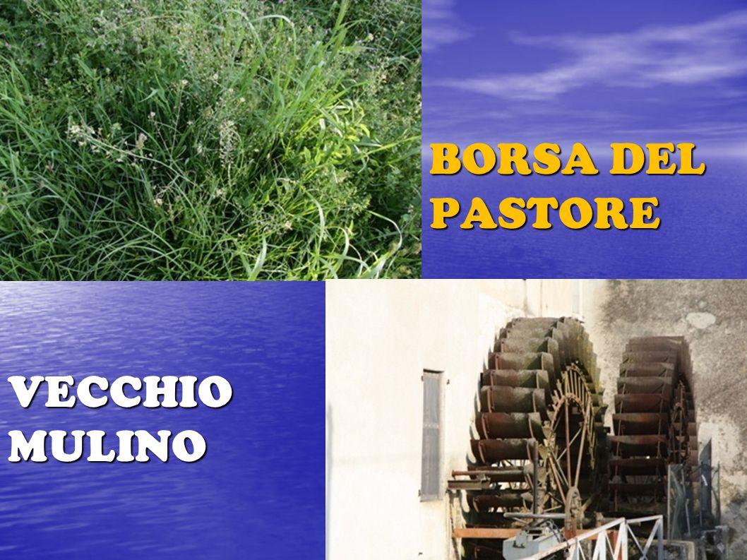 BORSA DEL PASTORE VECCHIO MULINO