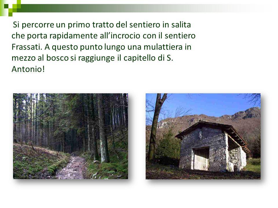 Si percorre un primo tratto del sentiero in salita che porta rapidamente all'incrocio con il sentiero Frassati.
