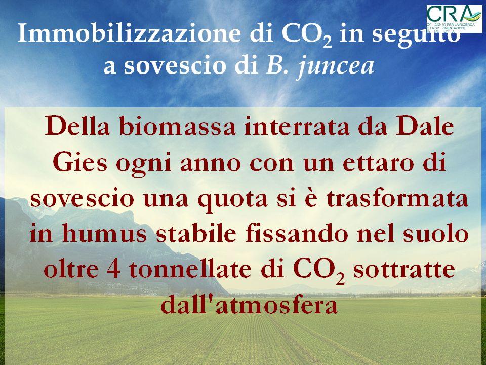 Immobilizzazione di CO2 in seguito