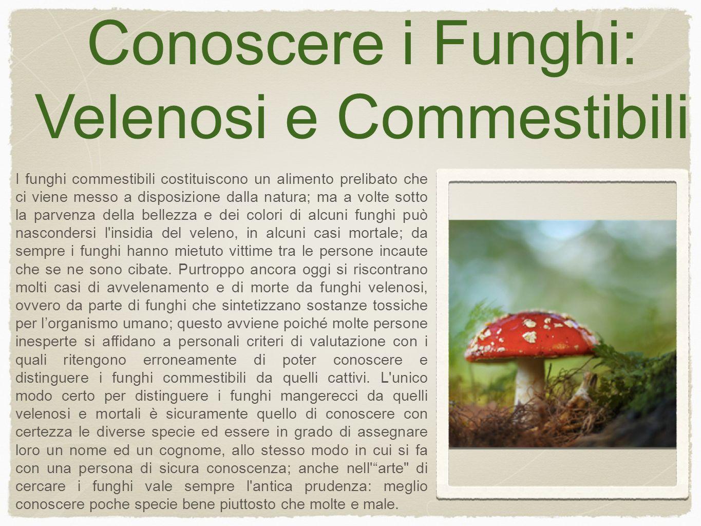 Conoscere i Funghi: Velenosi e Commestibili