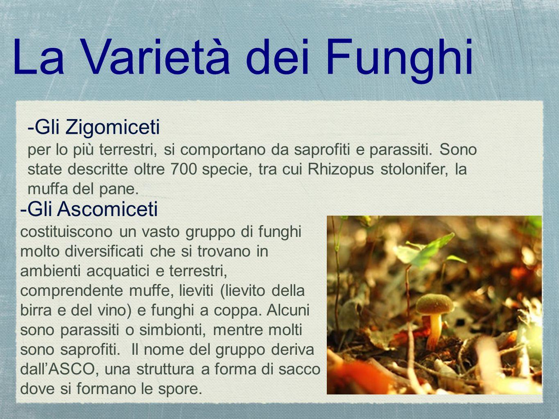 La Varietà dei Funghi -Gli Zigomiceti -Gli Ascomiceti