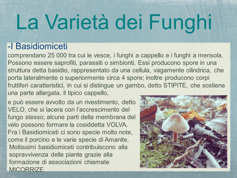 La Varietà dei Funghi -I Basidiomiceti