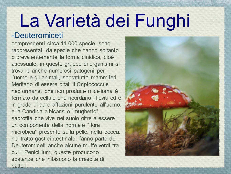 La Varietà dei Funghi -Deuteromiceti