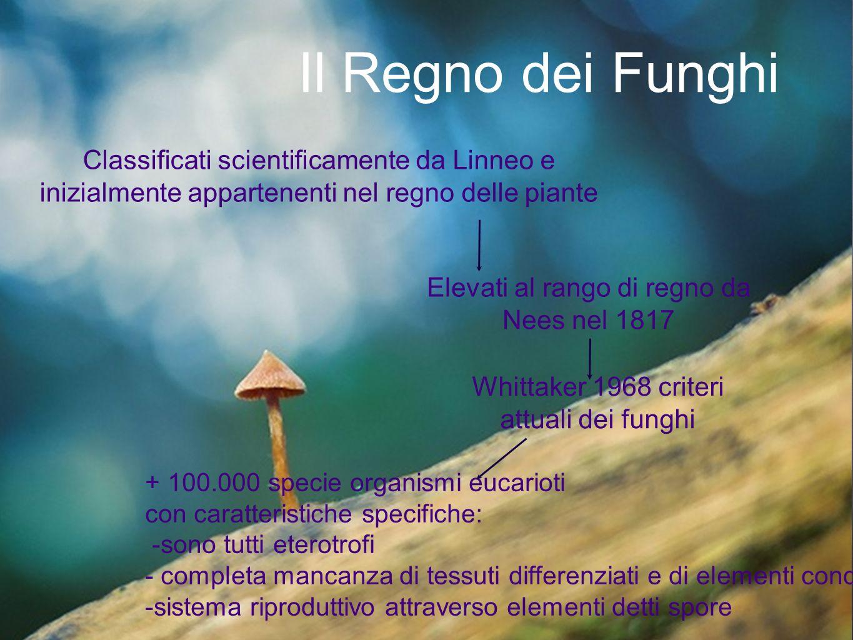 Il Regno dei Funghi Classificati scientificamente da Linneo e inizialmente appartenenti nel regno delle piante.