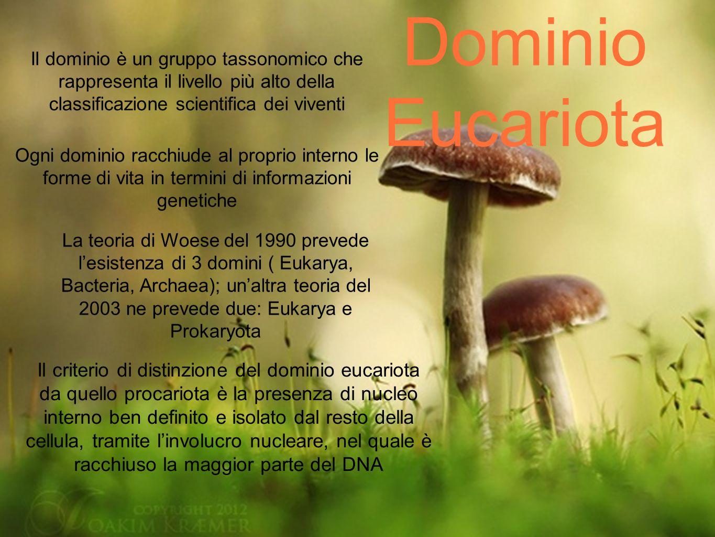 Dominio Eucariota Il dominio è un gruppo tassonomico che rappresenta il livello più alto della classificazione scientifica dei viventi.