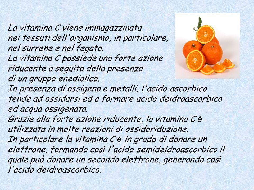 La vitamina C viene immagazzinata