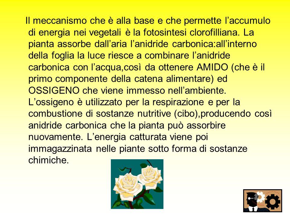 Il meccanismo che è alla base e che permette l'accumulo di energia nei vegetali è la fotosintesi clorofilliana.