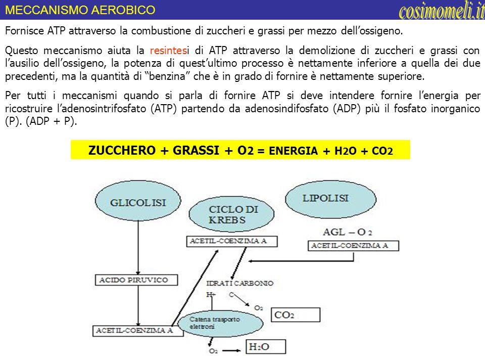 ZUCCHERO + GRASSI + O2 = ENERGIA + H2O + CO2