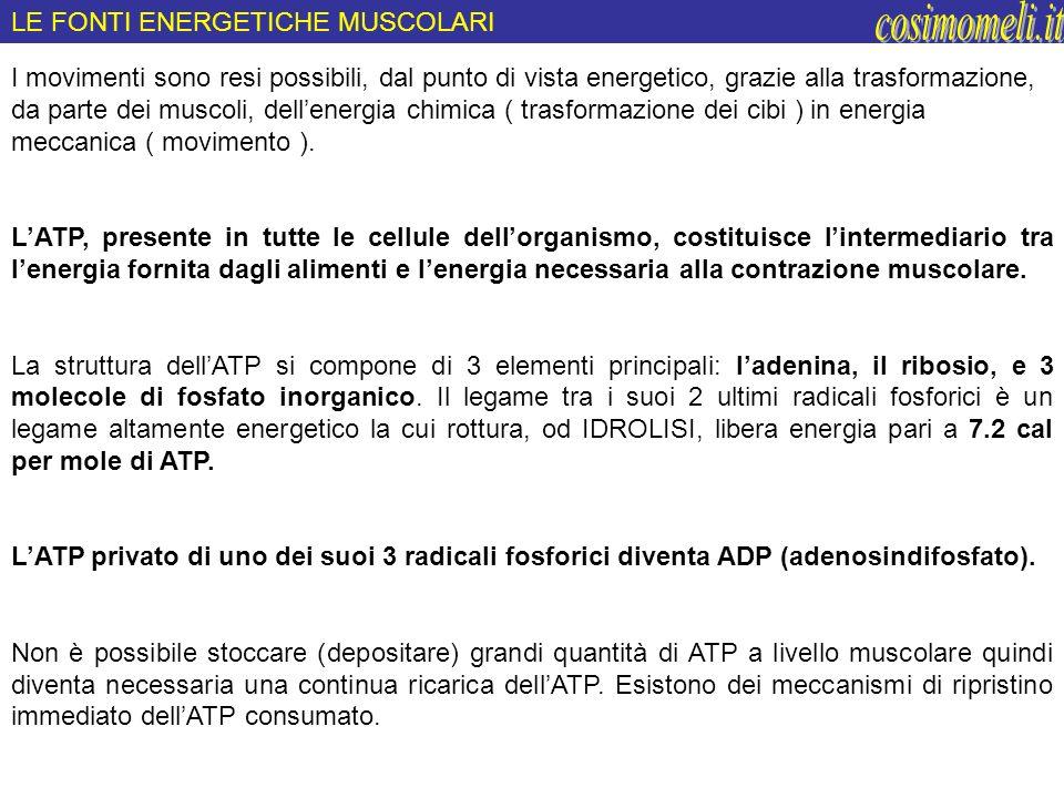 cosimomeli.it LE FONTI ENERGETICHE MUSCOLARI