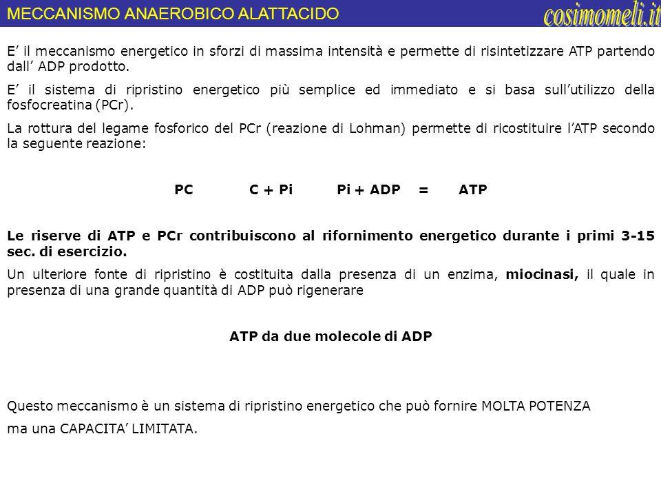 ATP da due molecole di ADP