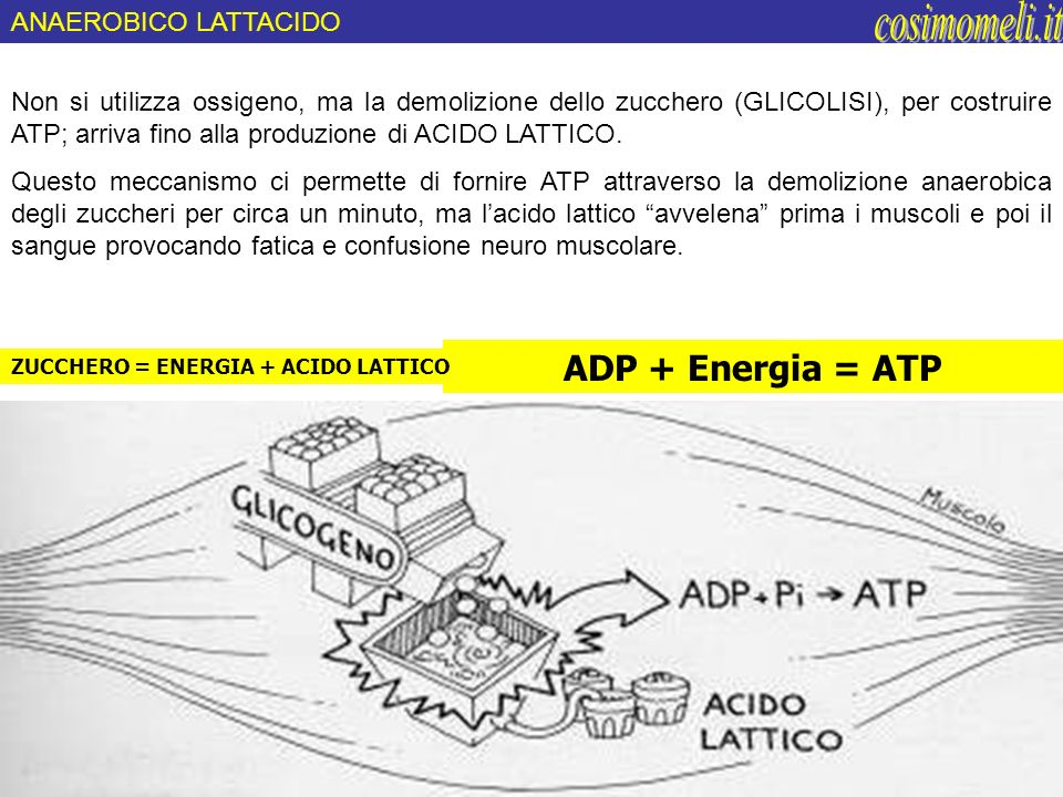 cosimomeli.it ADP + Energia = ATP ANAEROBICO LATTACIDO