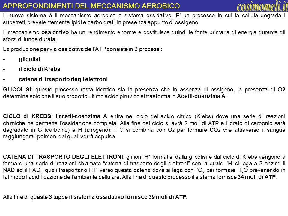 cosimomeli.it APPROFONDIMENTI DEL MECCANISMO AEROBICO