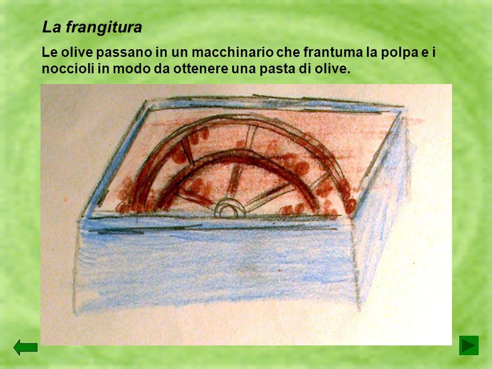 La frangituraLe olive passano in un macchinario che frantuma la polpa e i noccioli in modo da ottenere una pasta di olive.