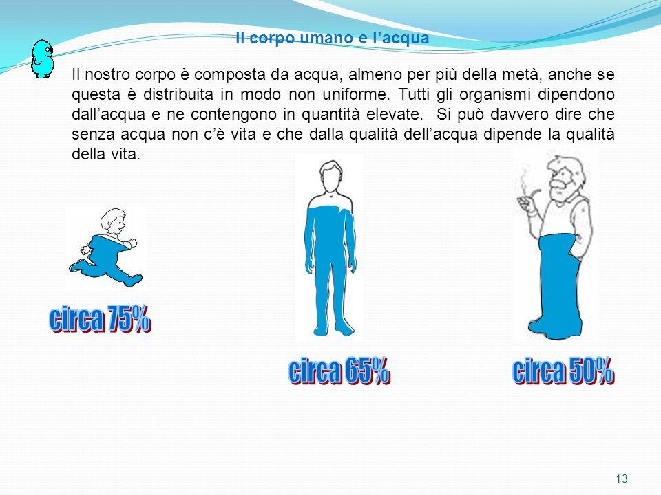 Il corpo umano e l'acqua