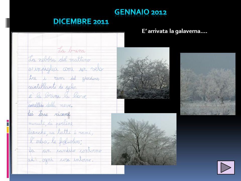 gennaio 2012 Dicembre 2011 E' arrivata la galaverna….