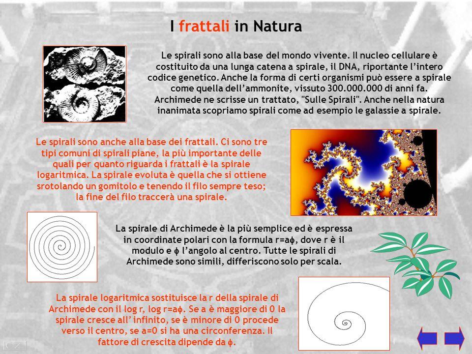 I frattali in Natura