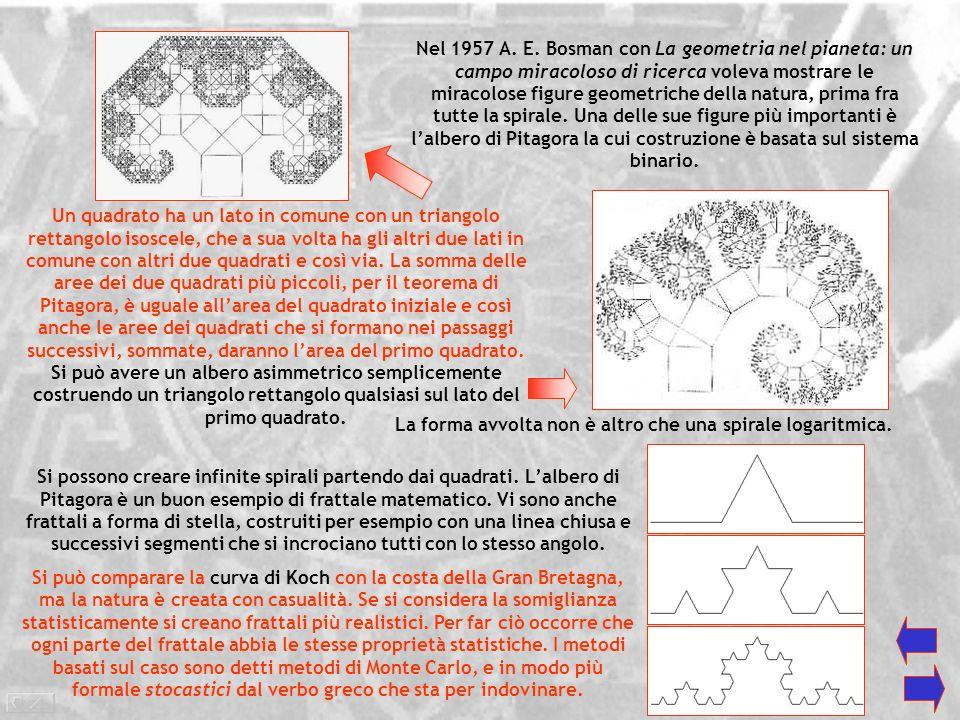 La forma avvolta non è altro che una spirale logaritmica.