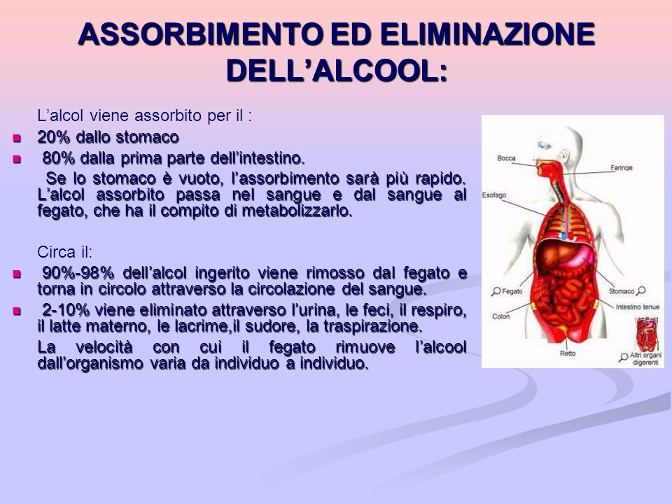 ASSORBIMENTO ED ELIMINAZIONE DELL'ALCOOL: