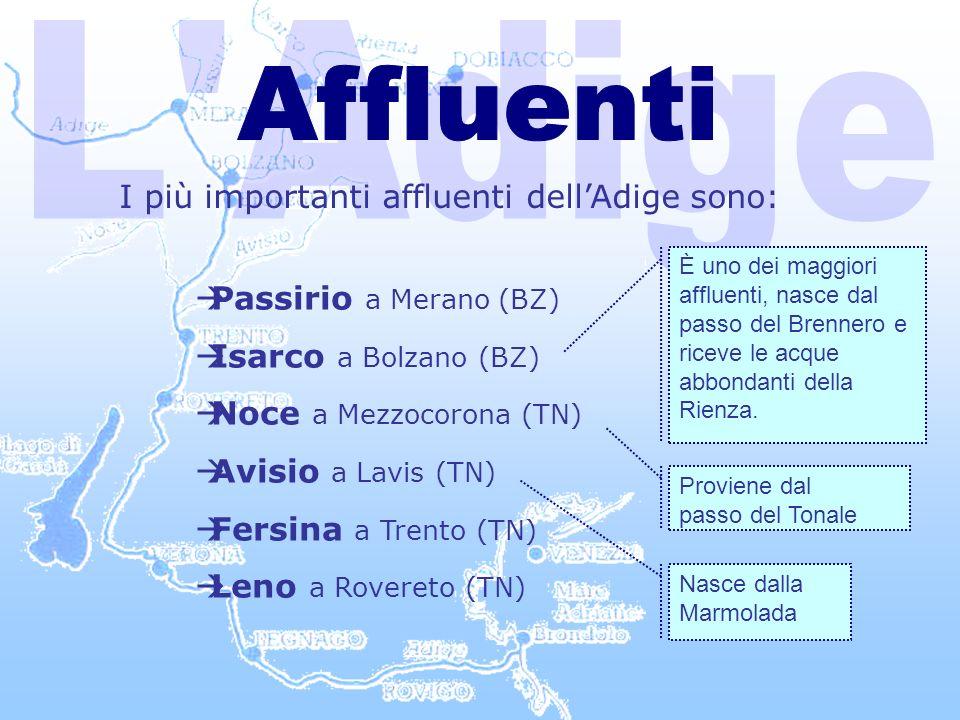 L Adige Affluenti I più importanti affluenti dell'Adige sono: