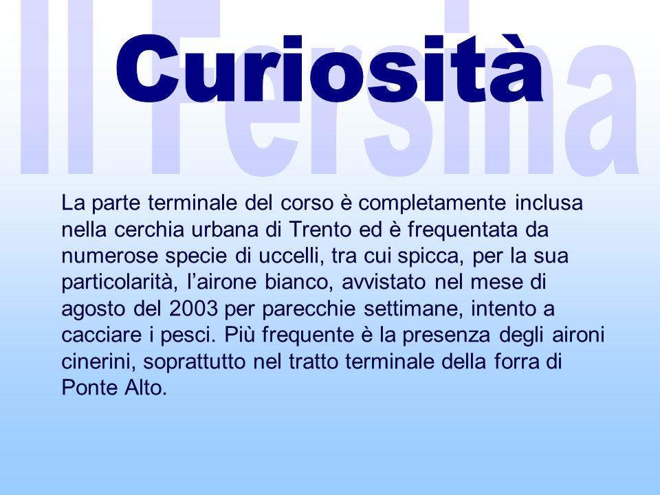Il Fersina Curiosità.