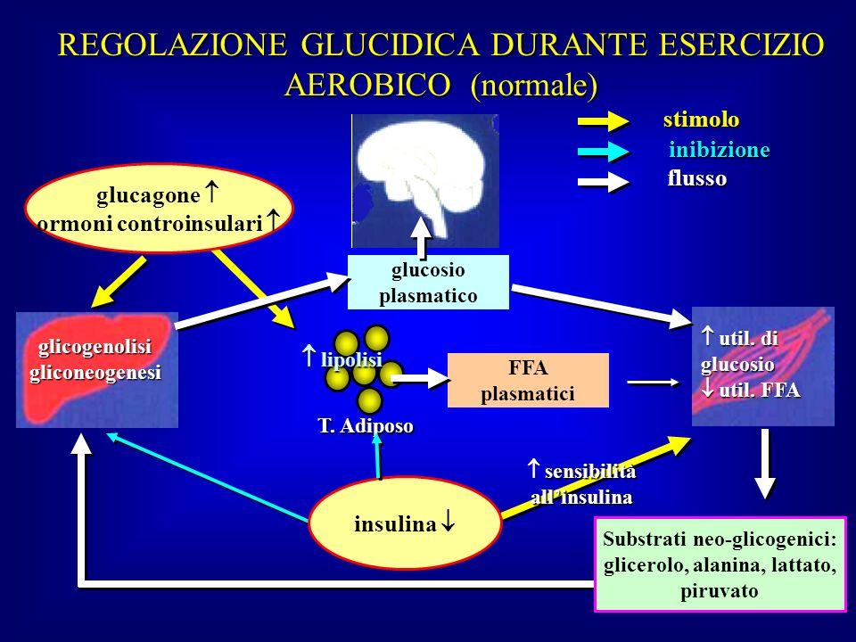 REGOLAZIONE GLUCIDICA DURANTE ESERCIZIO AEROBICO (normale)
