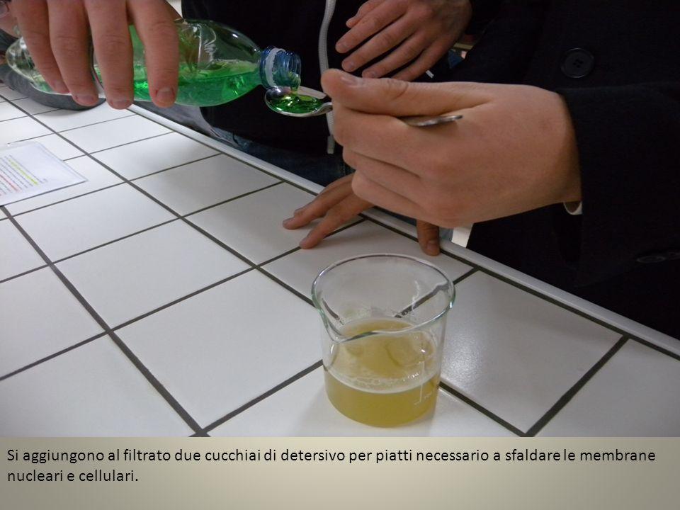Si aggiungono al filtrato due cucchiai di detersivo per piatti necessario a sfaldare le membrane