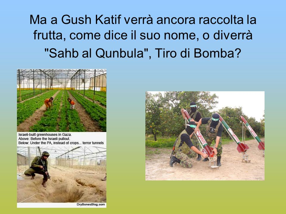 Ma a Gush Katif verrà ancora raccolta la frutta, come dice il suo nome, o diverrà Sahb al Qunbula , Tiro di Bomba