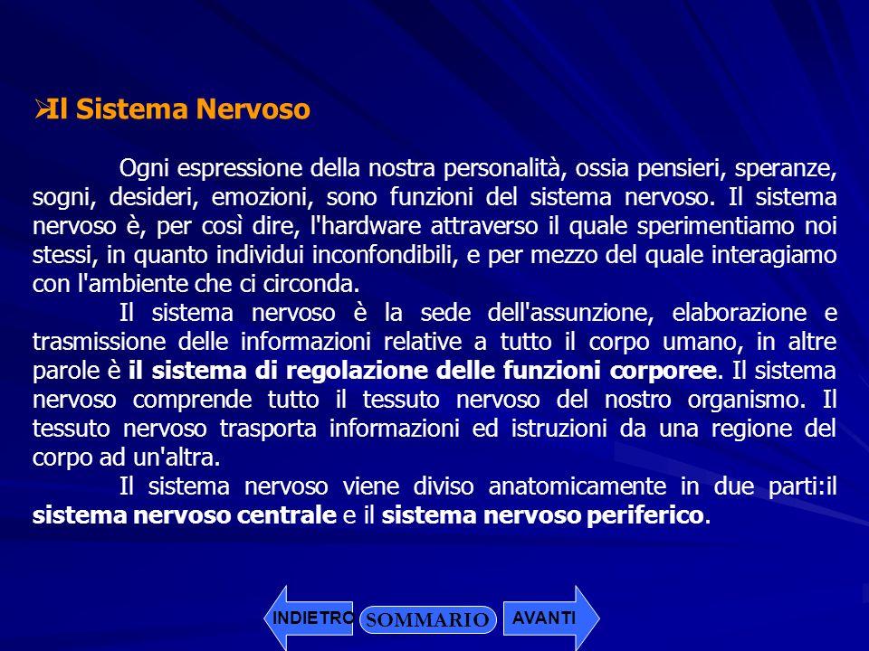 Il Sistema Nervoso