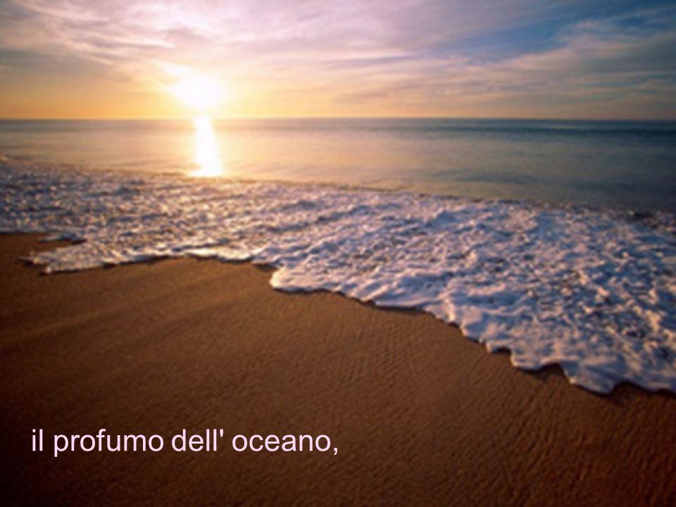 il profumo dell oceano,