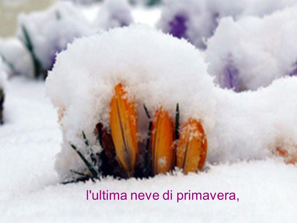 l ultima neve di primavera,
