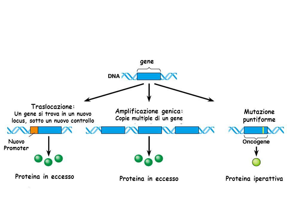 Amplificazione genica: Mutazione puntiforme