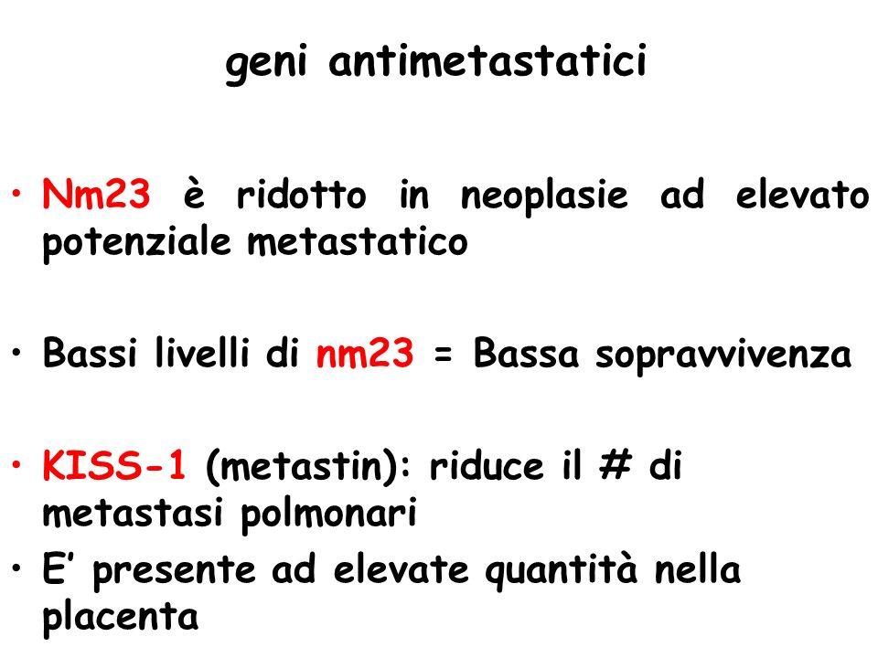 geni antimetastatici Nm23 è ridotto in neoplasie ad elevato potenziale metastatico. Bassi livelli di nm23 = Bassa sopravvivenza.