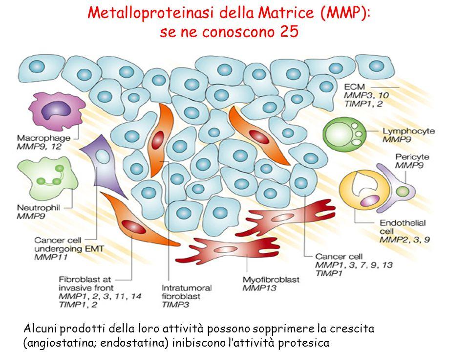 Metalloproteinasi della Matrice (MMP): se ne conoscono 25