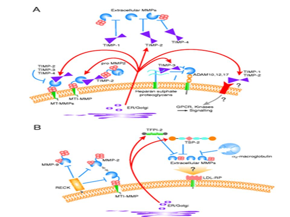 Metalloproteinase inhibitors in the pericellular environment