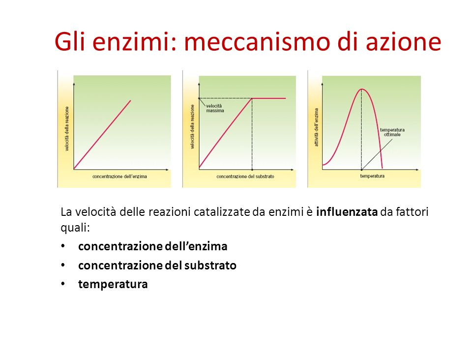 Gli enzimi: meccanismo di azione