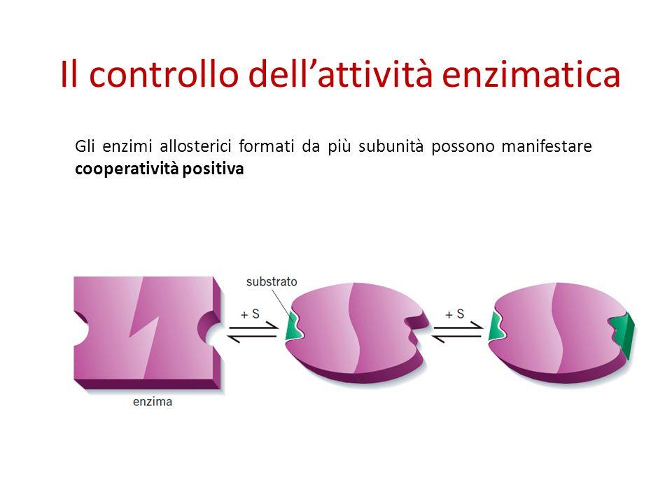 Il controllo dell'attività enzimatica