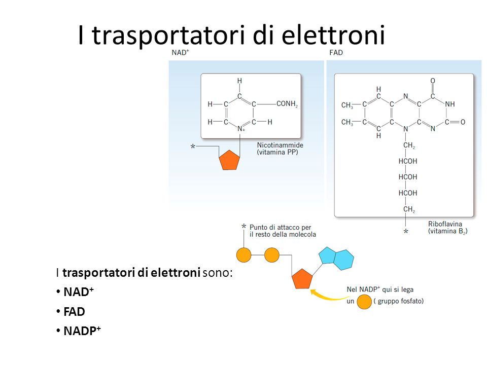I trasportatori di elettroni