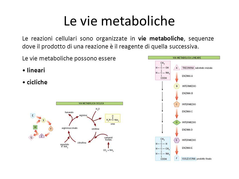Le vie metaboliche
