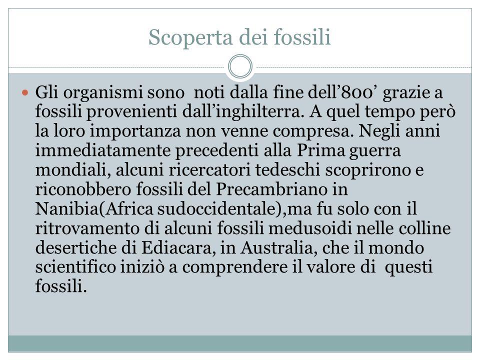 Scoperta dei fossili