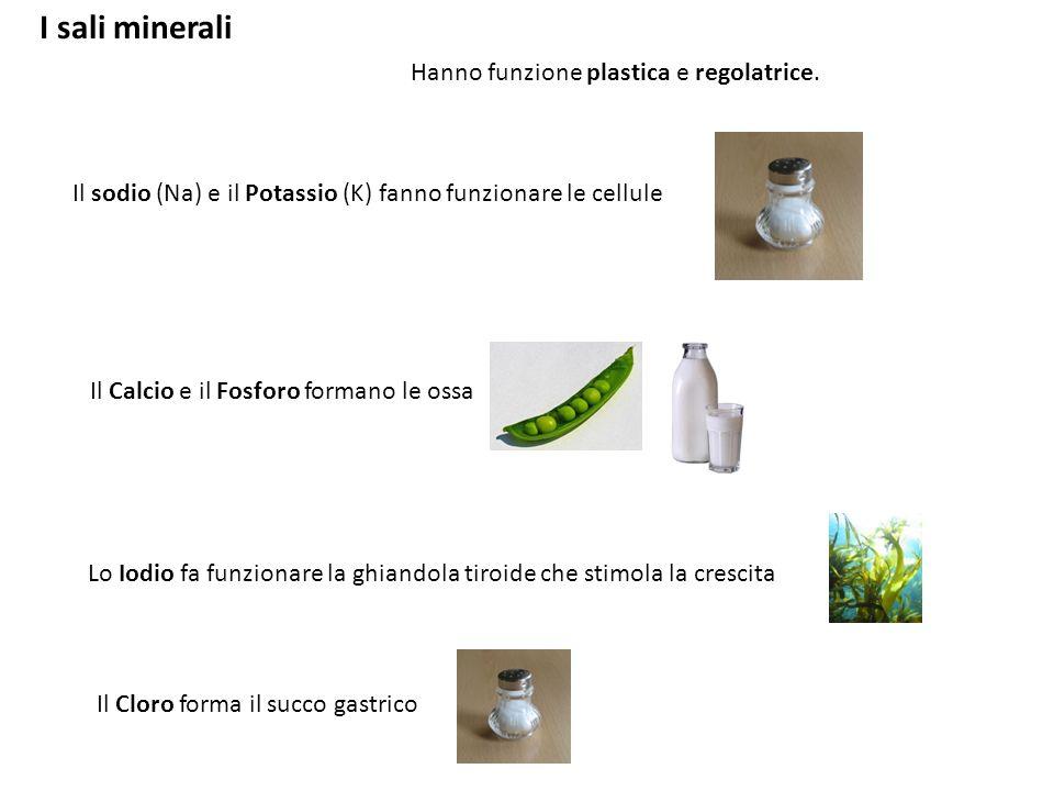 I sali minerali Hanno funzione plastica e regolatrice.