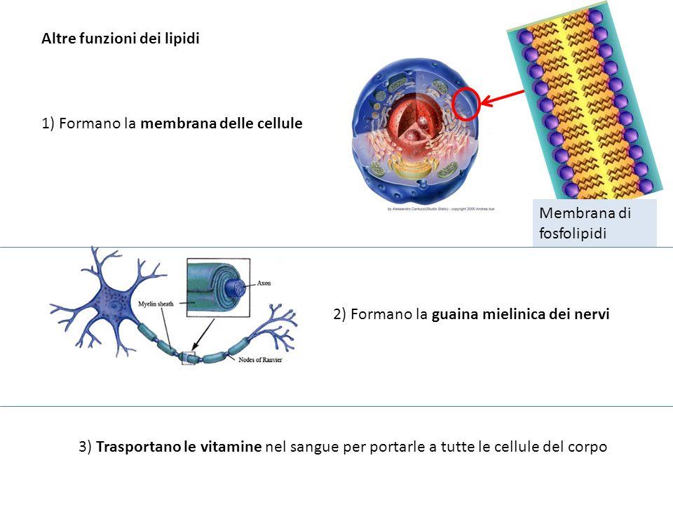 Altre funzioni dei lipidi