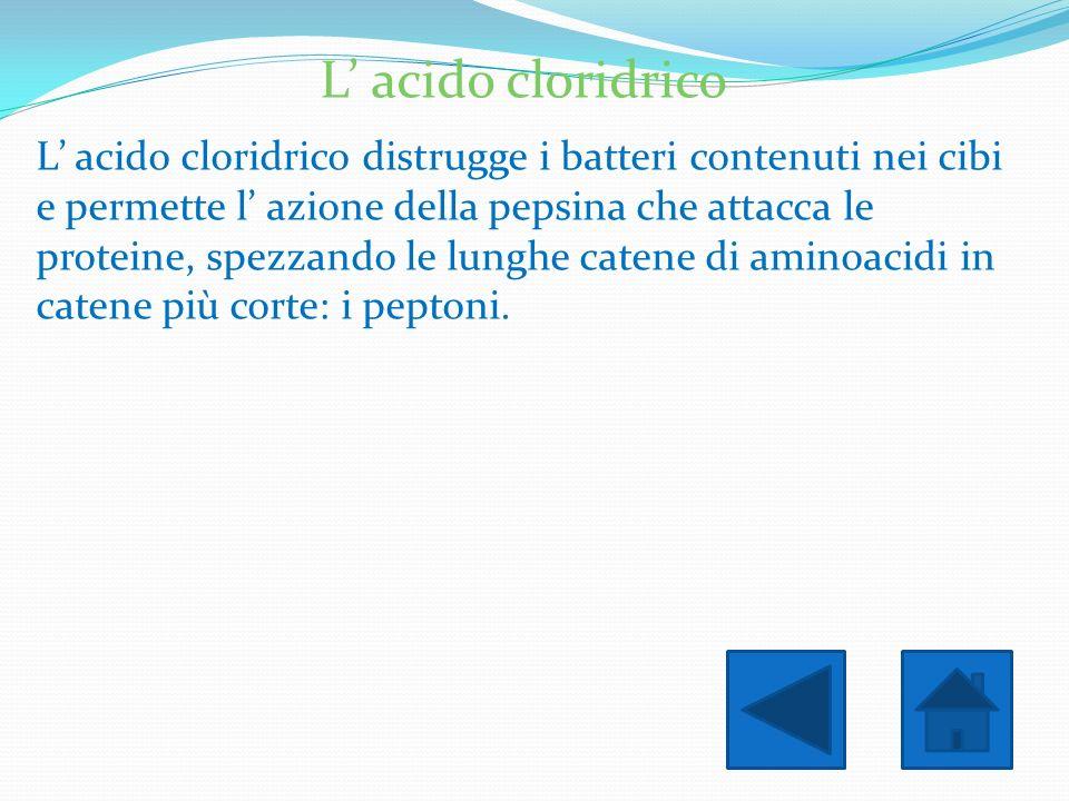 L' acido cloridrico