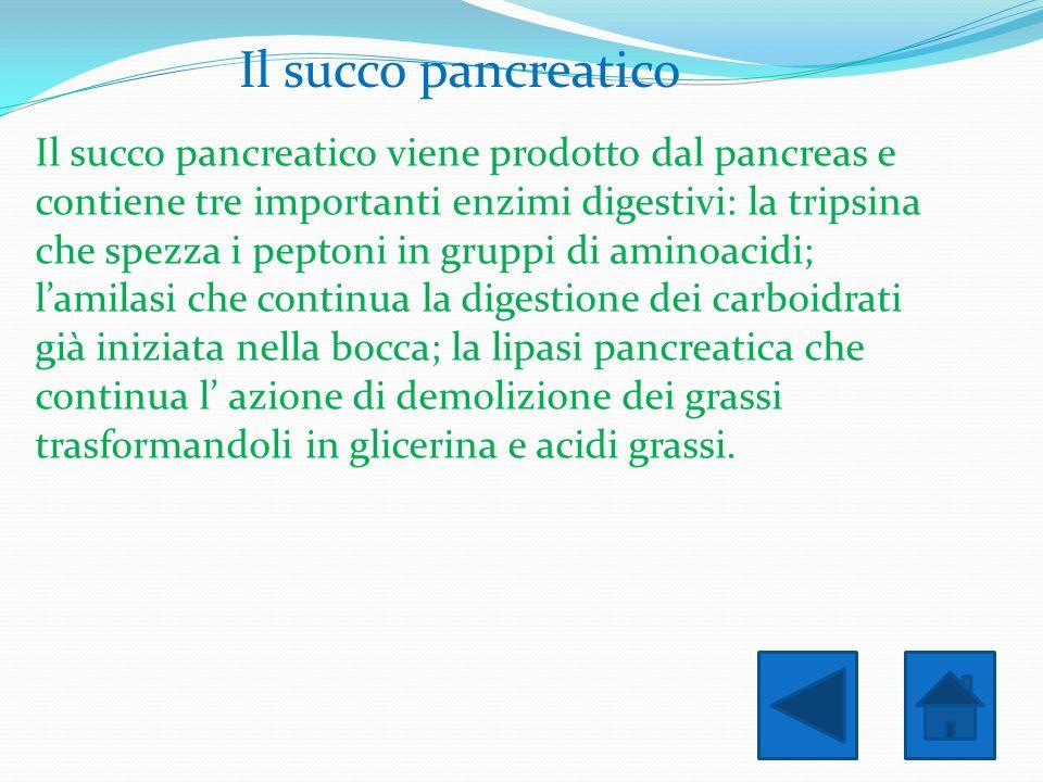 Il succo pancreatico
