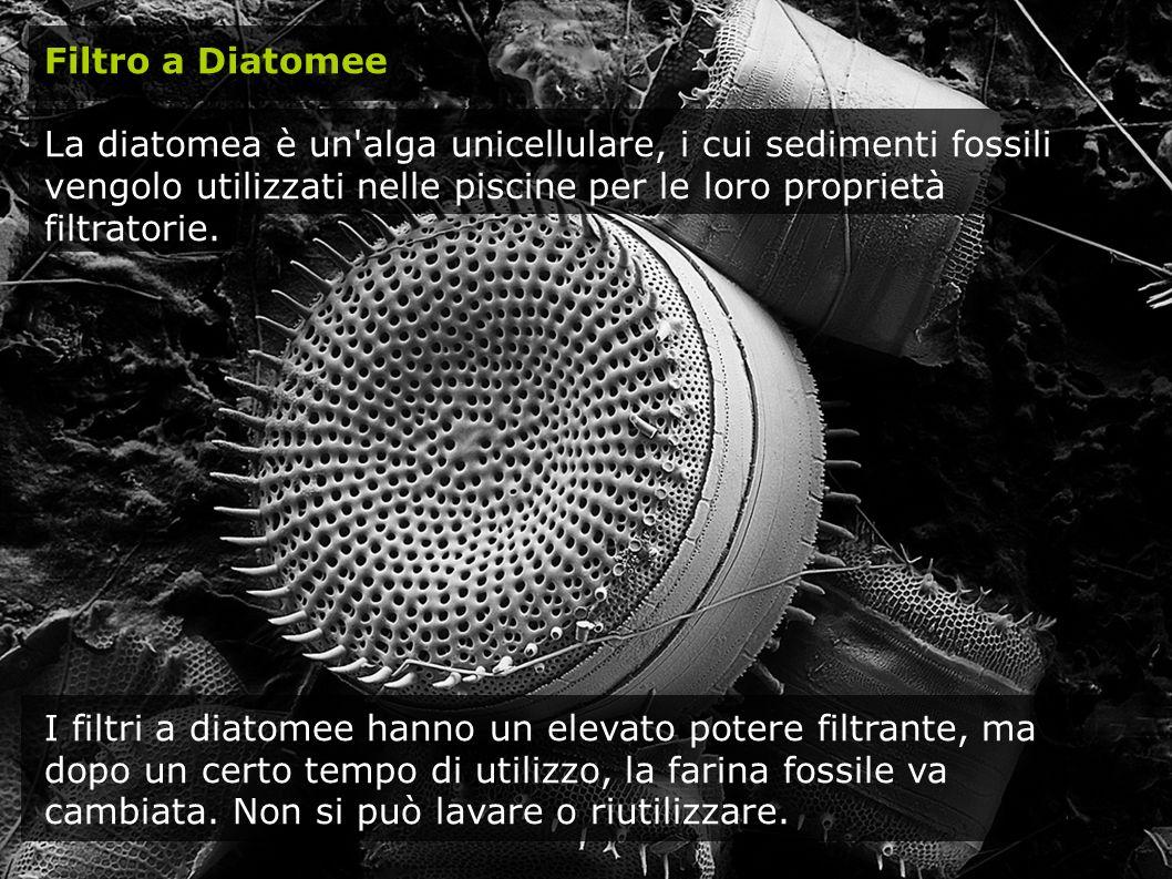Filtro a Diatomee La diatomea è un alga unicellulare, i cui sedimenti fossili vengolo utilizzati nelle piscine per le loro proprietà filtratorie.