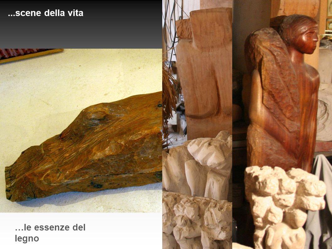 ...scene della vita …le essenze del legno
