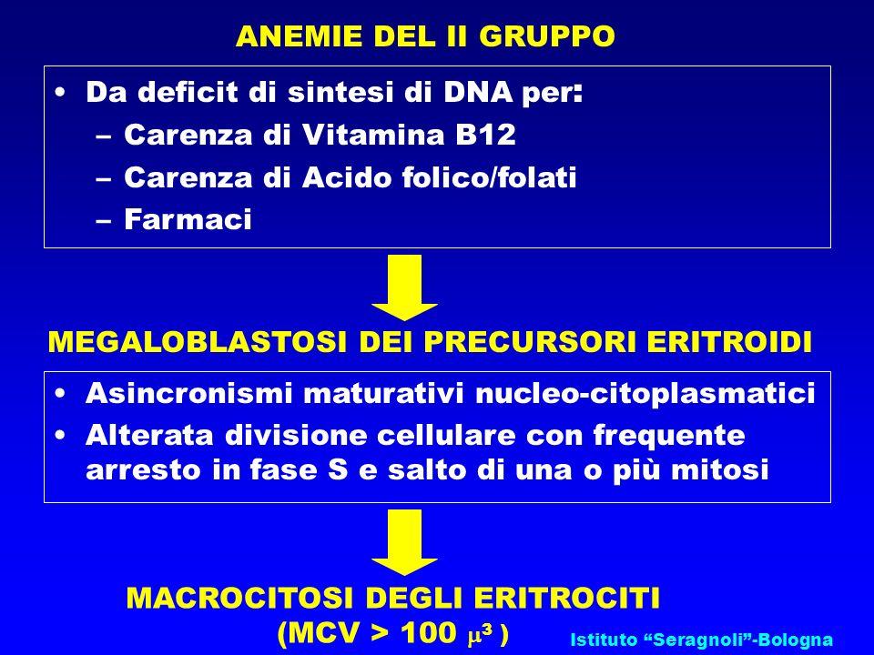 Da deficit di sintesi di DNA per: Carenza di Vitamina B12