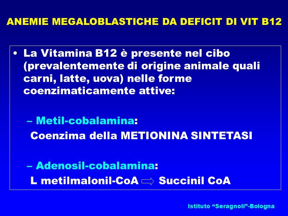 ANEMIE MEGALOBLASTICHE DA DEFICIT DI VIT B12