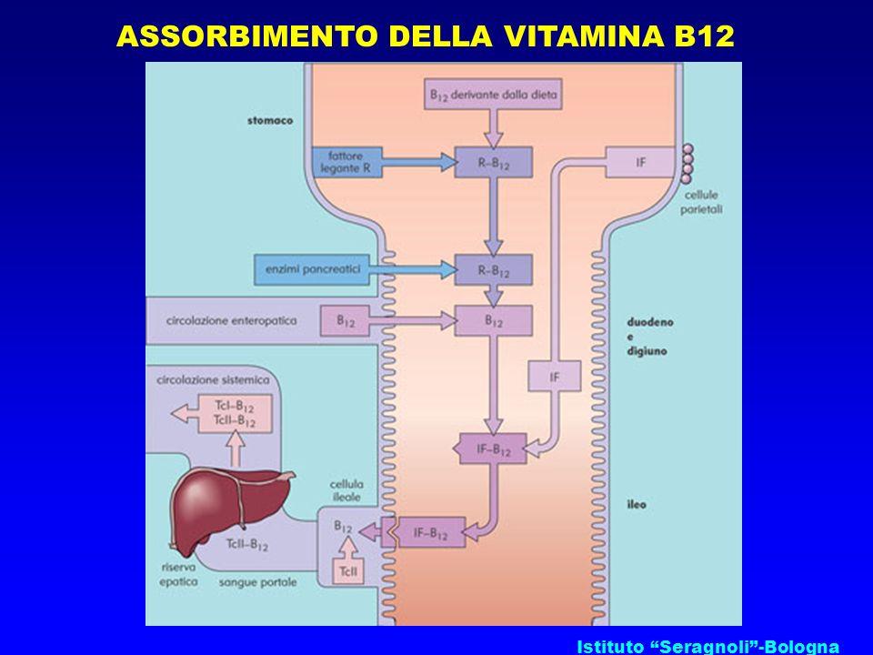ASSORBIMENTO DELLA VITAMINA B12